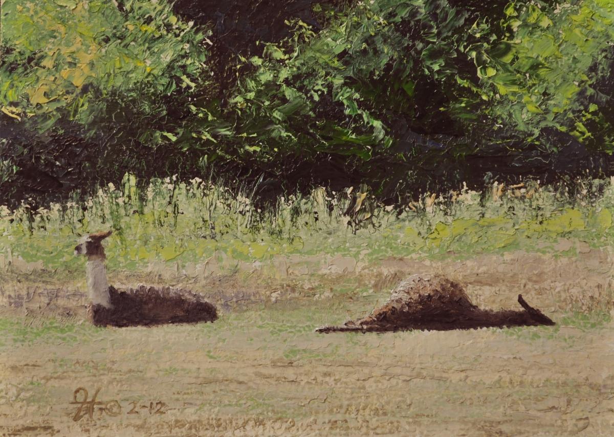 Lounging Llamas (large view)