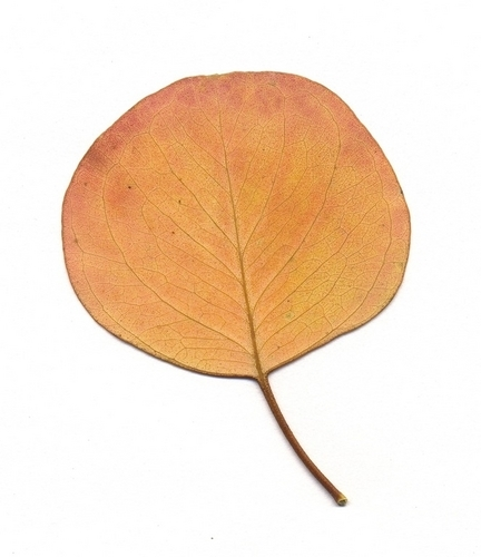 Leaves by Dayna Willard