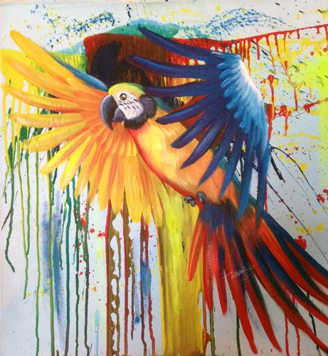 Macaw Splash