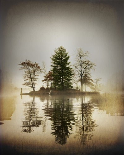 Misty lake and loon