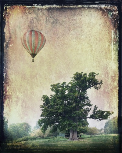 Oak and balloon