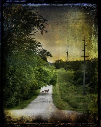 Deer in road