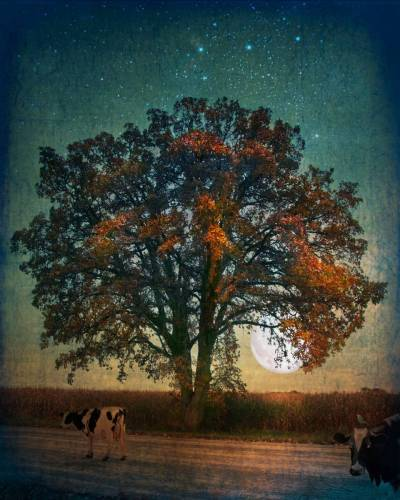 Tree and cows under Orion