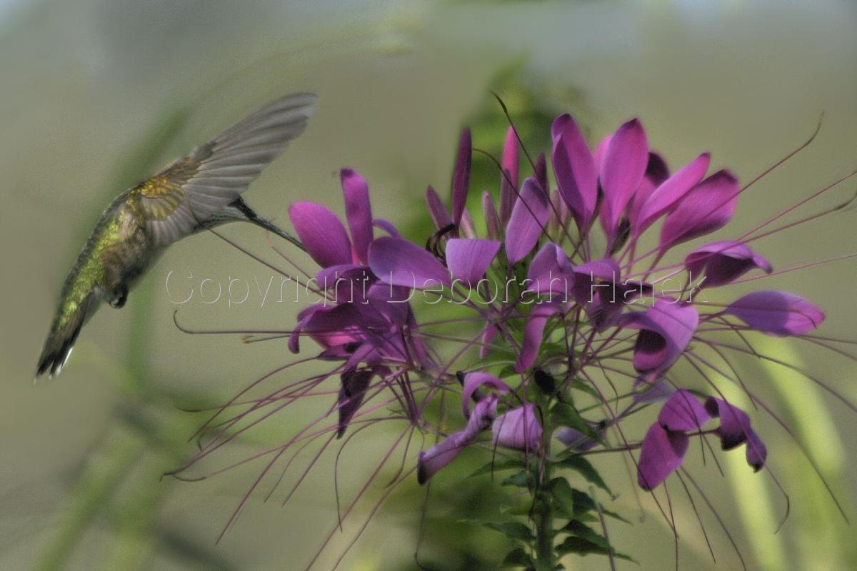 Behind My Wings (large view)