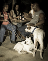 Dogs in Bars  (thumbnail)