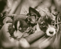 Pups in a Sling (thumbnail)