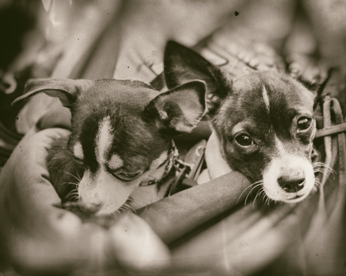 Pups in a Sling