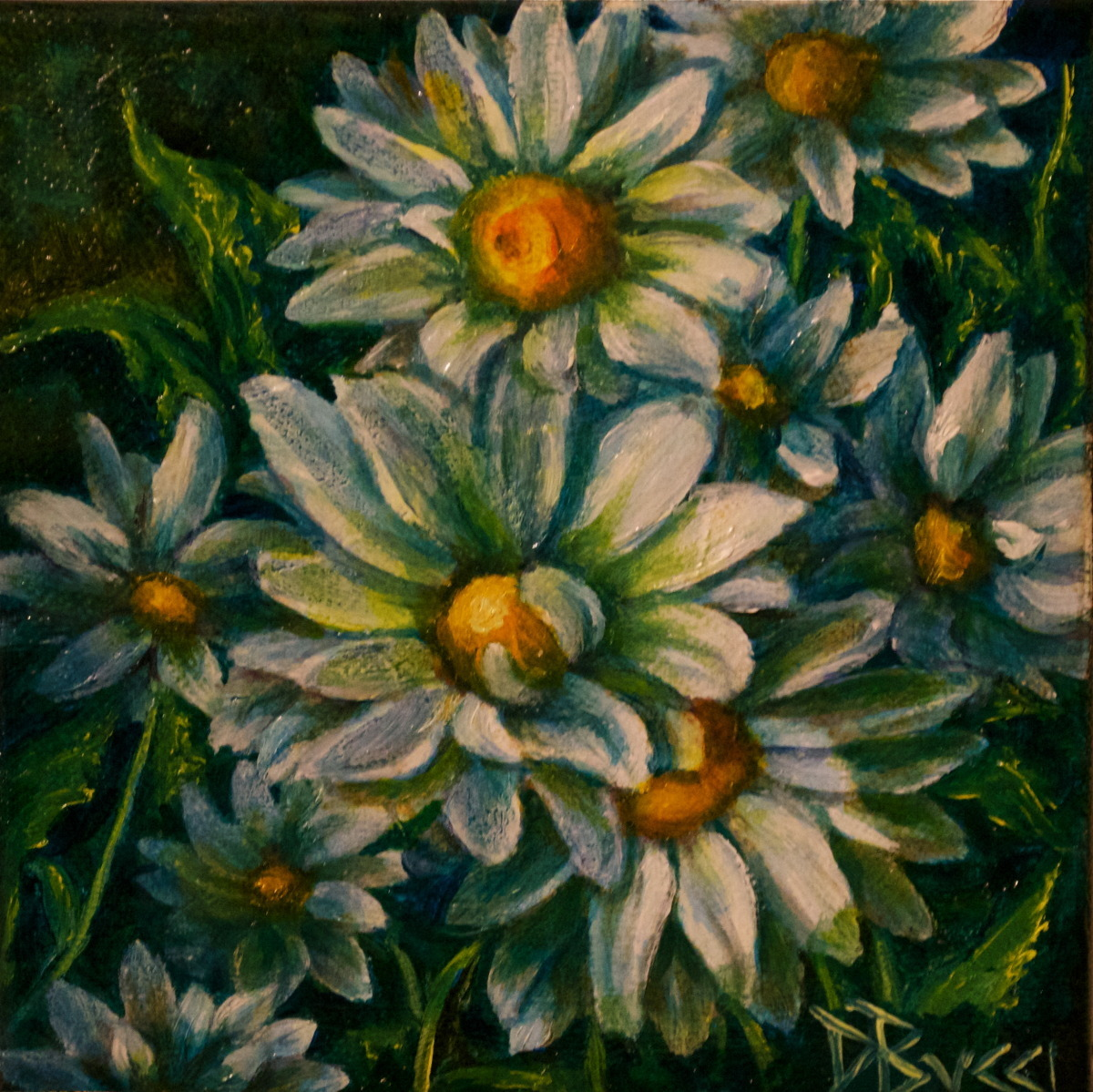 "Debra Bucci Fine Art presents Daisy Crazy which is a Pocketbook or miniature oil painting that measures  6"" square. This is white, yellow and green painting of an outside group of daisies. It is a feel good painting. (large view)"