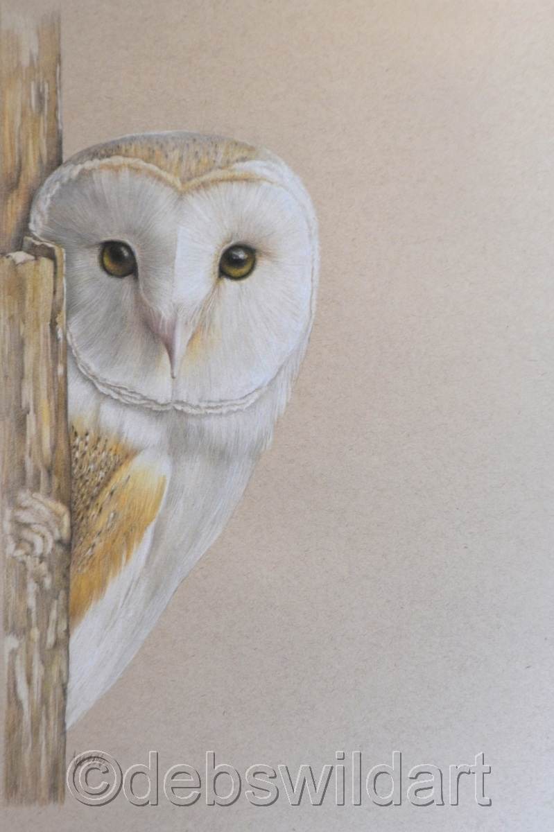 Animal Colored pencil Drawings: Barn Owl by Debra Spence