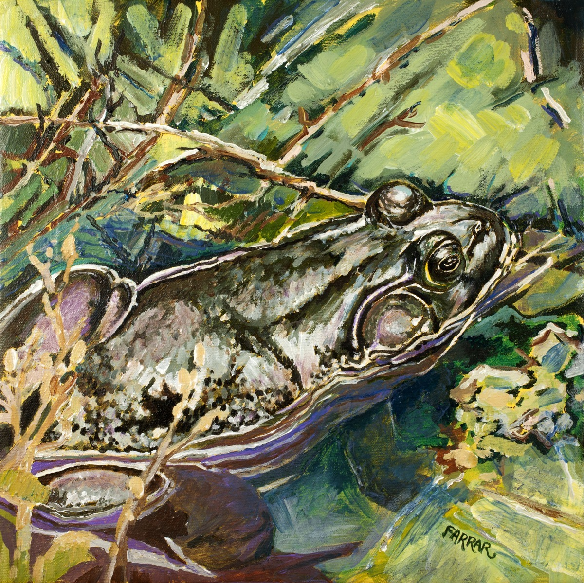 Pond Frog (large view)
