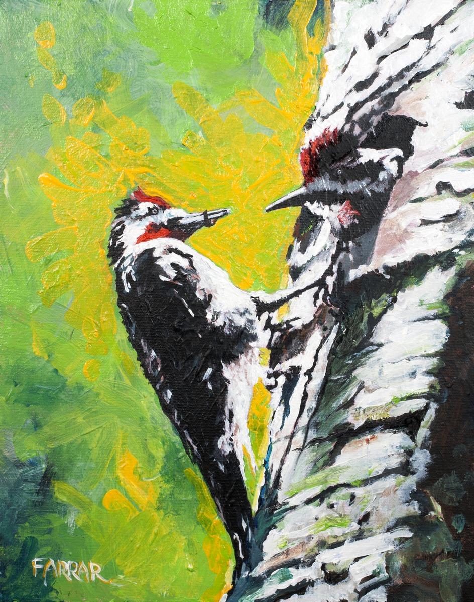 Downy Woodpeckers (large view)