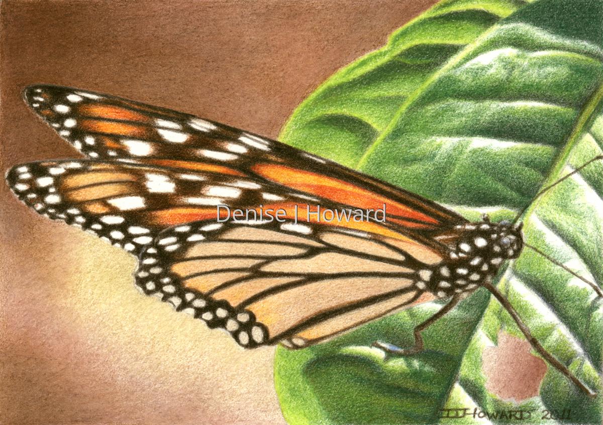Monarch #1 (large view)