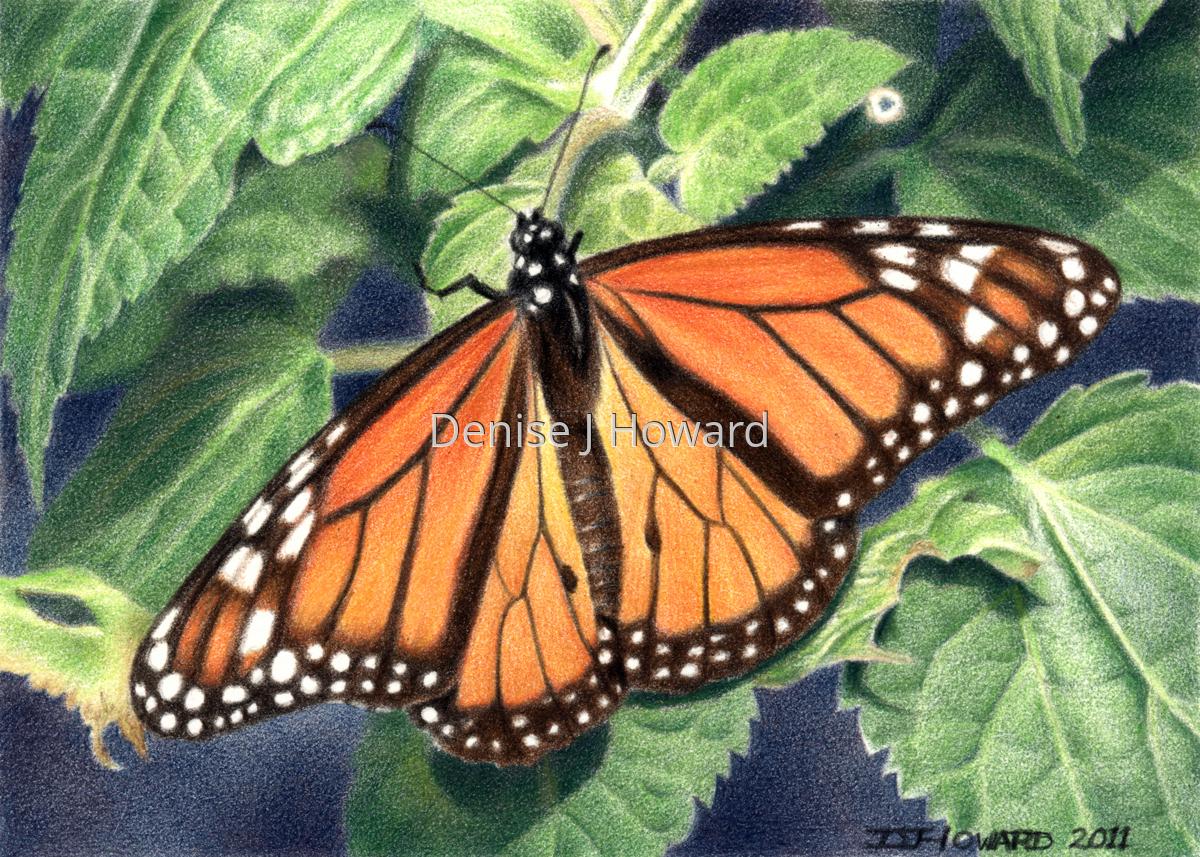 Monarch #4 (large view)