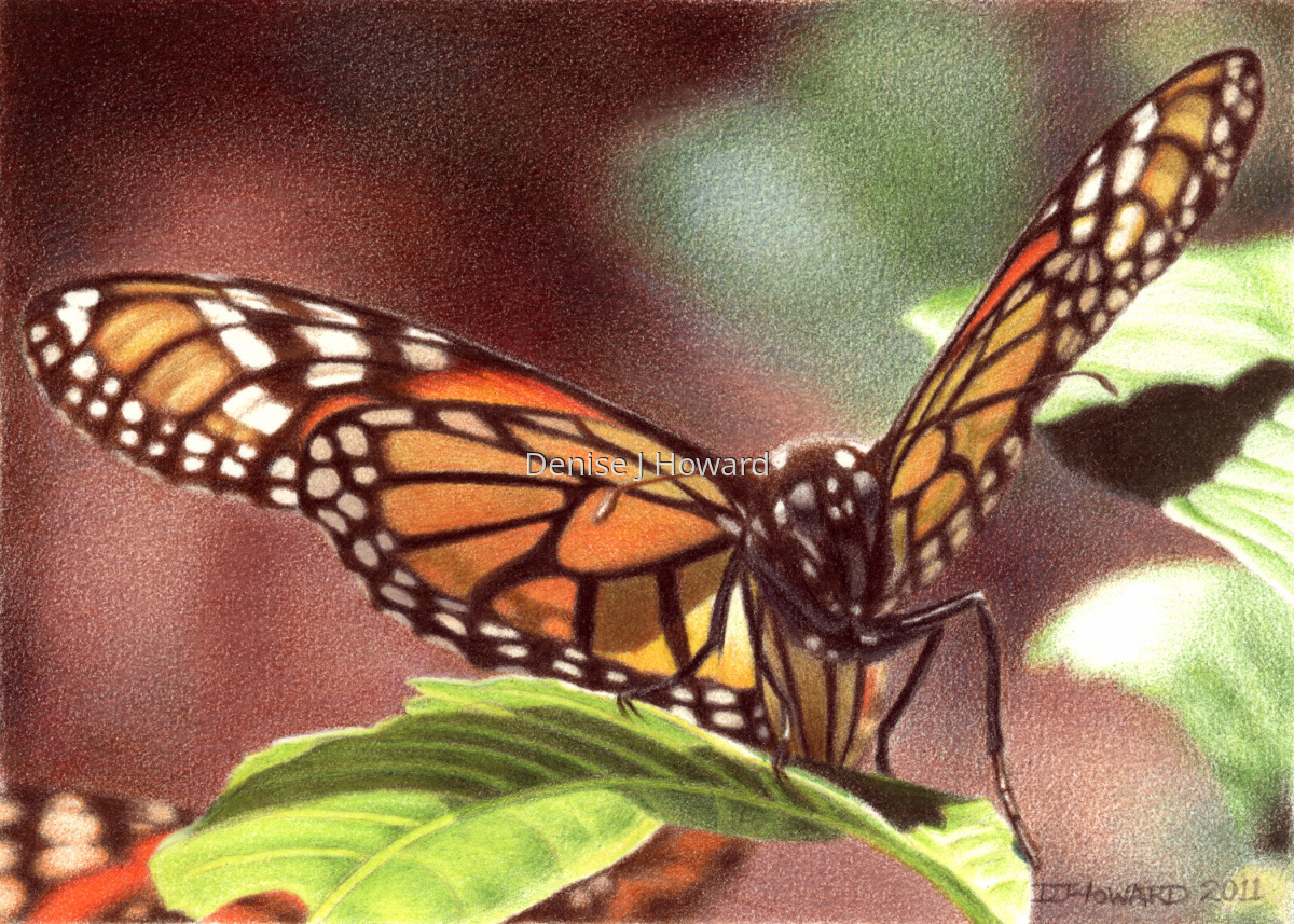 Monarch #5 (large view)