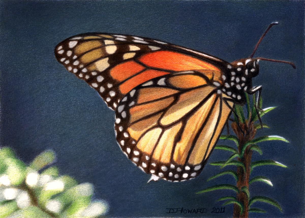 Monarch #6 (large view)