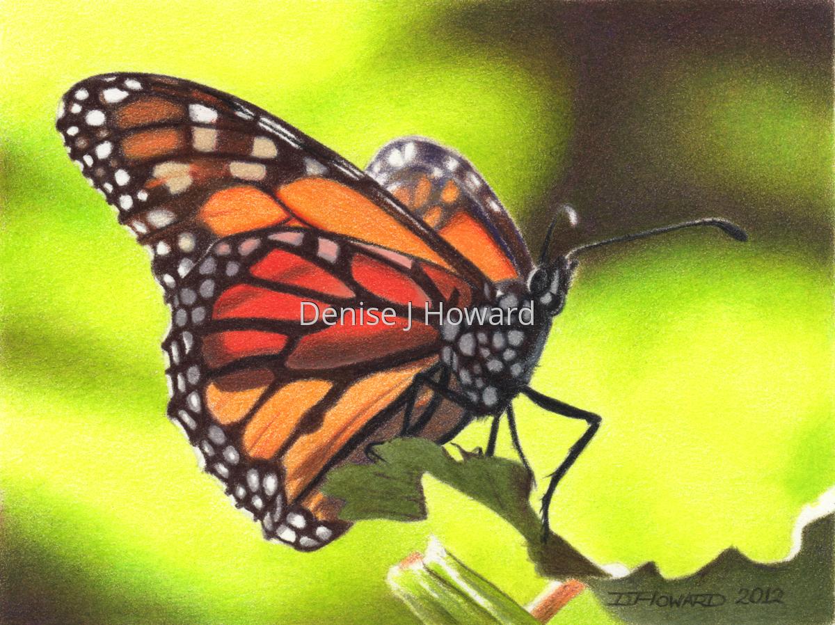 Monarch #8 (large view)