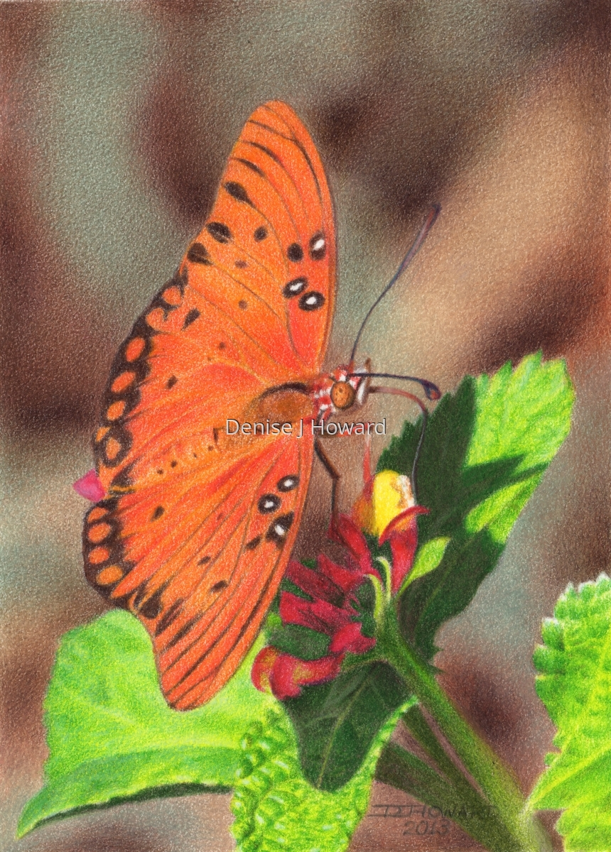Colored pencil drawing of a gulf fritillary butterfly on a lantana blossom (large view)