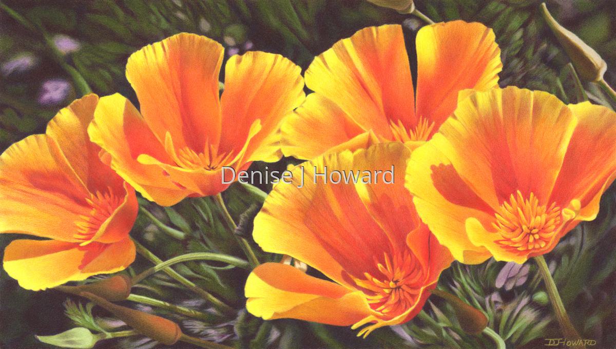 California Poppy Quintet (large view)