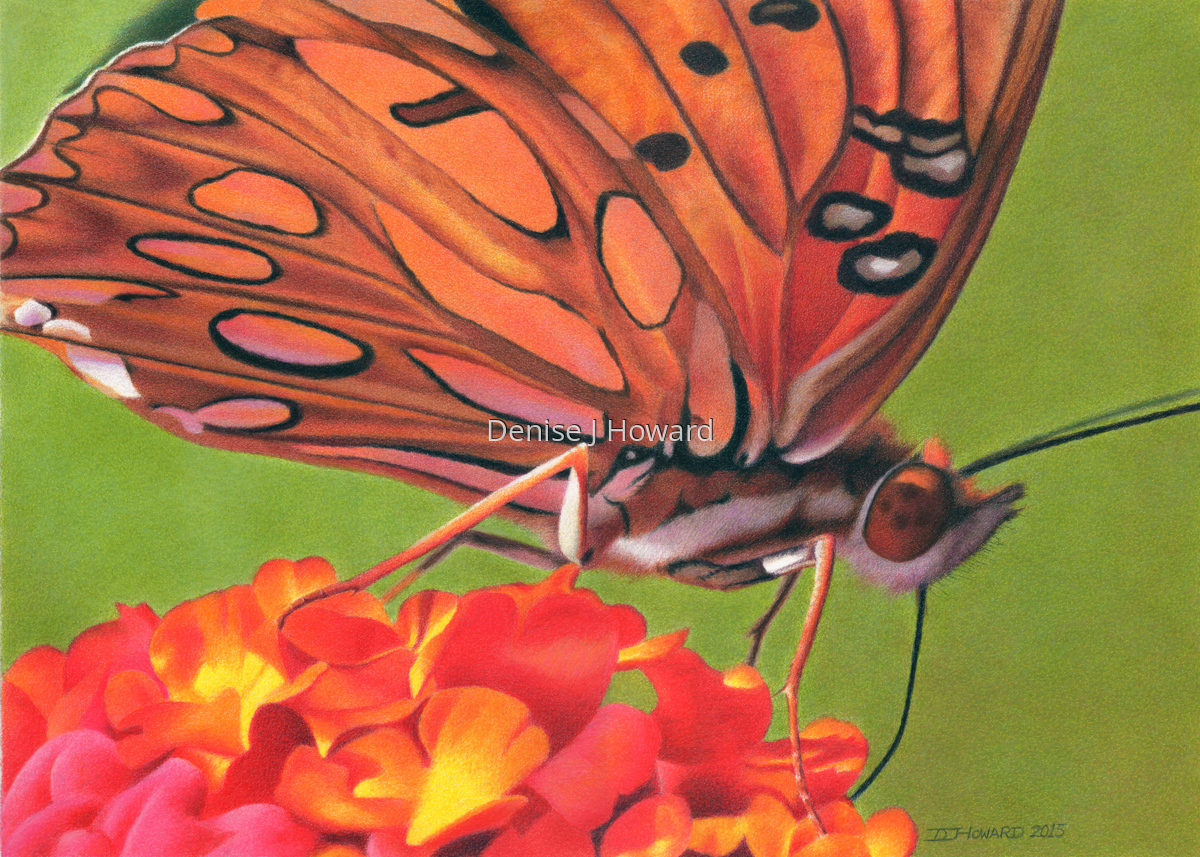 Gulf Fritillary #2 (large view)