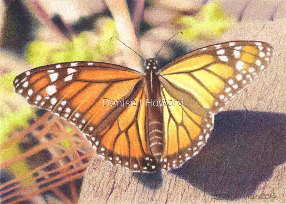Monarch #9 (large view)
