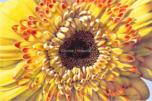 Chrysanthemum by Denise J Howard