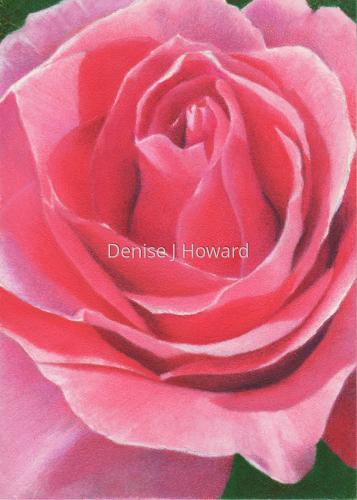Pink Rose by Denise J Howard