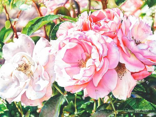 A Rose in Winter #1