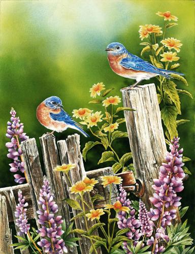 Blue Bird Morning
