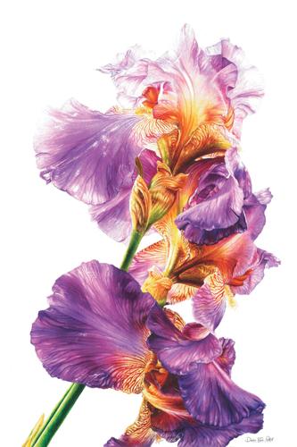 Botanical Iris
