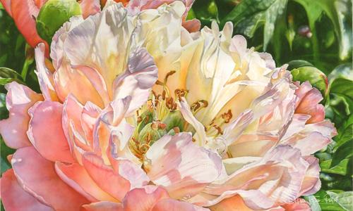 Glowing Peony by Debbie Friis-Pettitt Watercolors