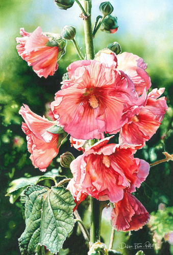 Halo Hollyhocks by Debbie Friis-Pettitt Watercolors
