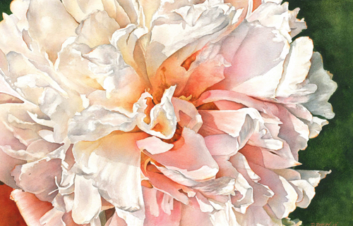 Moon River Peony by Debbie Friis-Pettitt Watercolors