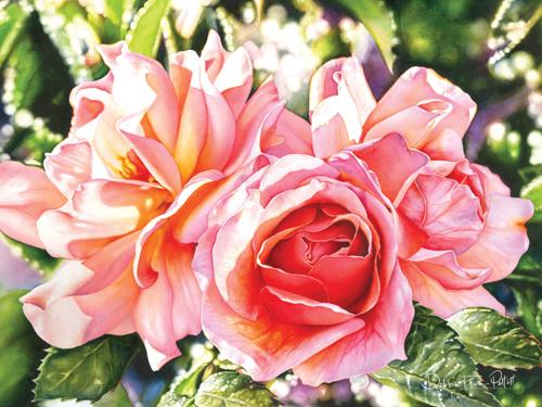 Rose #3 by Debbie Friis-Pettitt Watercolors
