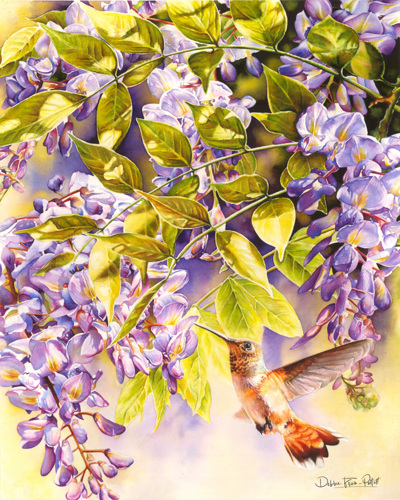 Wisteria and Hummer by Debbie Friis-Pettitt Watercolors