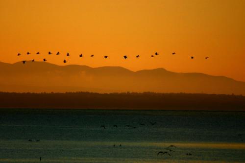 Fall migration over Lake Champlain, New York