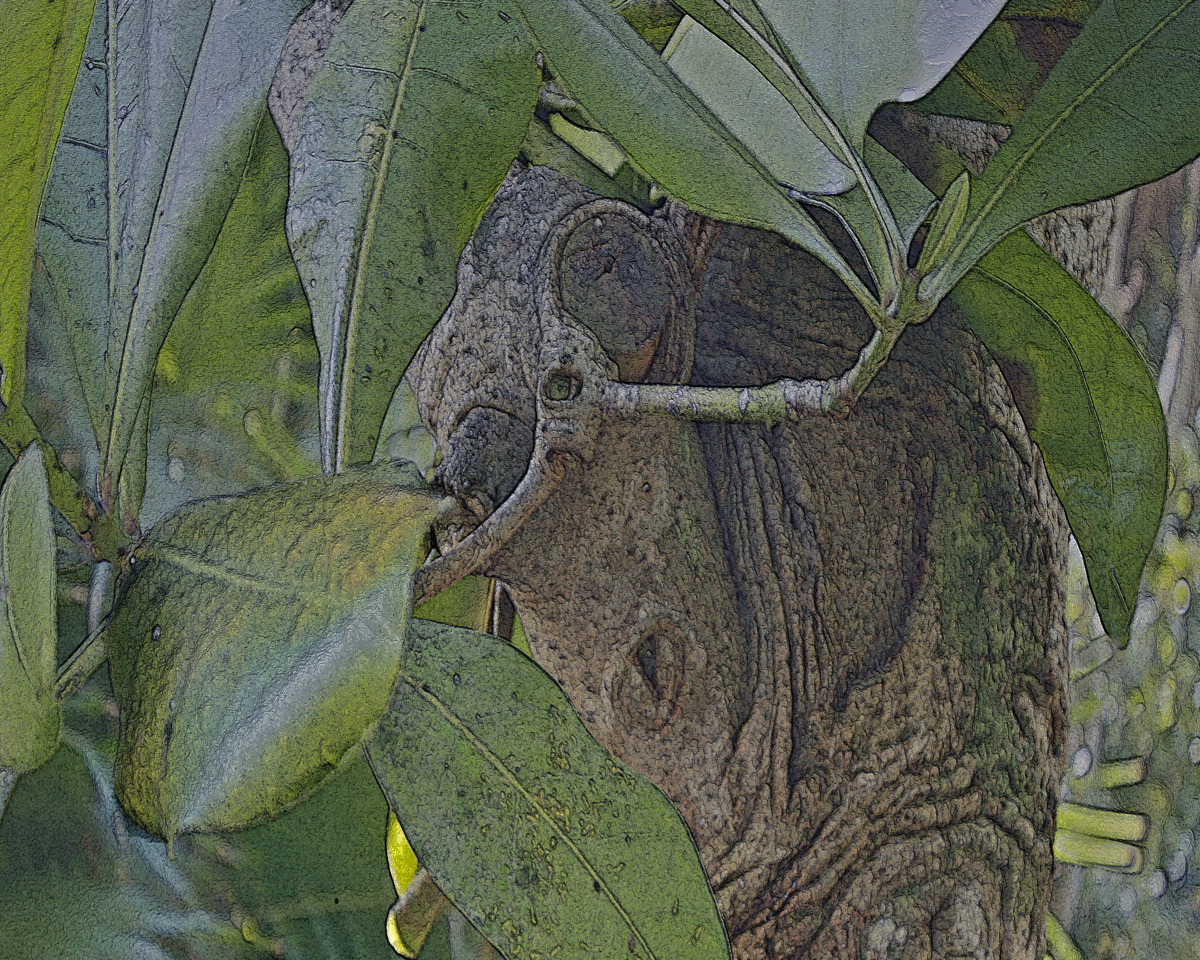 Leaf Bug (large view)