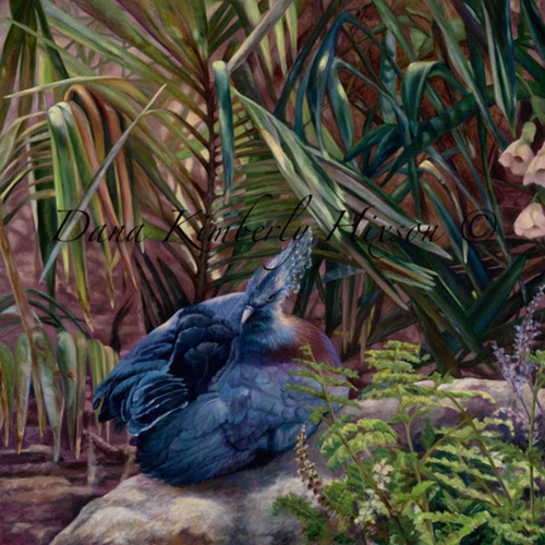 Blue Crowned Pigeon (large view)