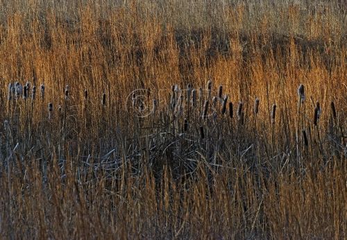 Winter Morning Grasses
