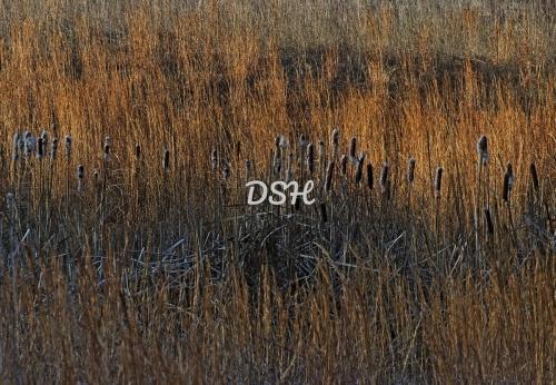 Winter Morning Grasses