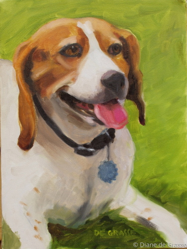 Beagle with Blue Tag