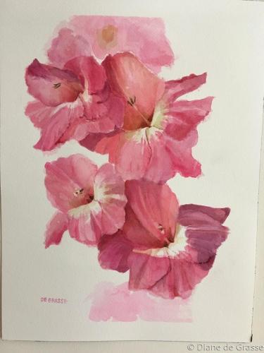 Cerise Gladiolus