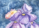 Spring iris (watercolor) (thumbnail)