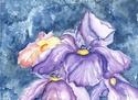 Spring iris (watercolor) (thumbnail)
