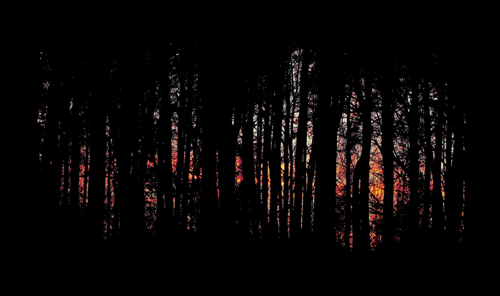 Piney Woods Sunset