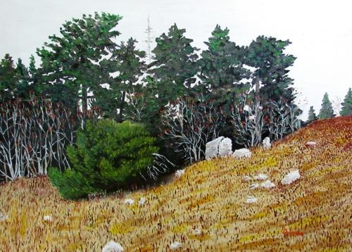 Mountain Ash on Whitetop Mountain