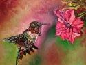 Colibri (Hummingbird) (thumbnail)