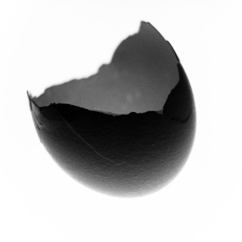 Egg Shell #5 - February 2013