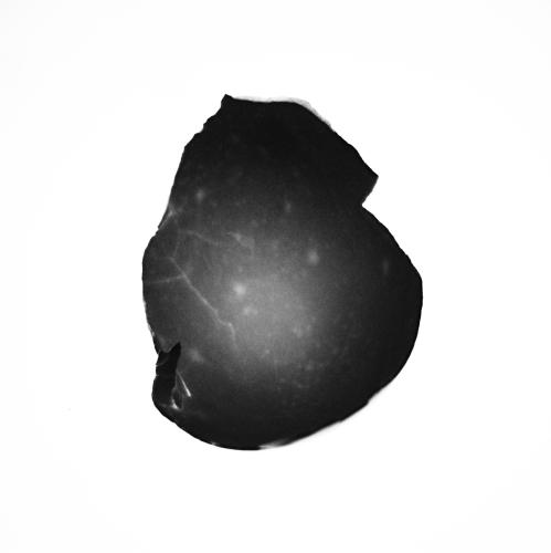 Egg Shell #1 - February 2013