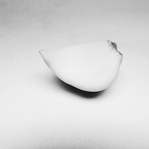 Garlic Clove #1 - June 2012