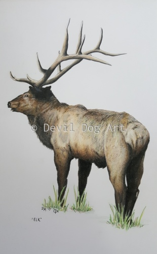 Elk by Devil Dog Art
